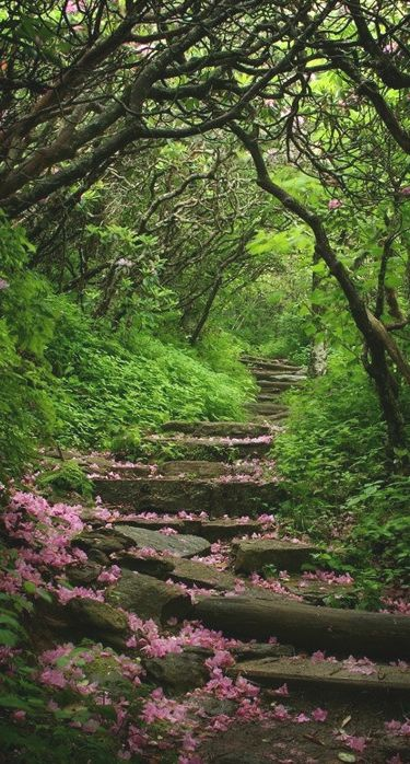 Craggy Gardens on Blue Ridge Parkway near Asheville, North Carolina • photo: July04Girl on WunderPhotos