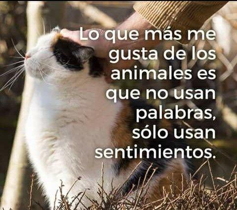 Los animales solo usan sentimientos
