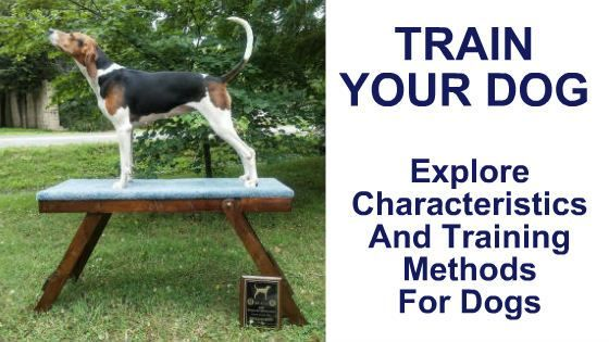 Train Your Dog Explore Characteristics And Training Methods For
