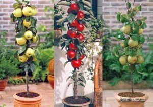 "Dwarf fruit trees! Plan to put in a few this month. Thinking of naming are estate ""Dwarfard Gardens"""