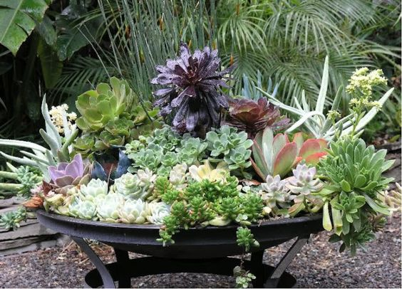 potted epiphyllums - Google Search