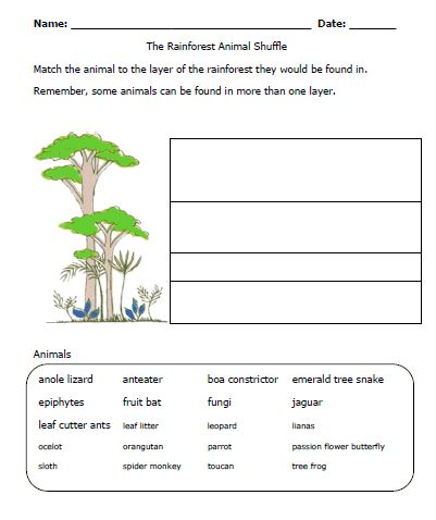 rainforest worksheet-layers: Must add to my Unit | primary ...