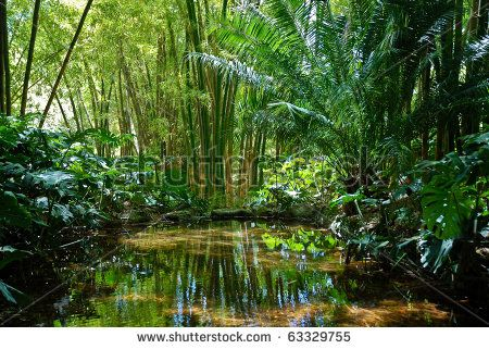 Jungle Scenery 2