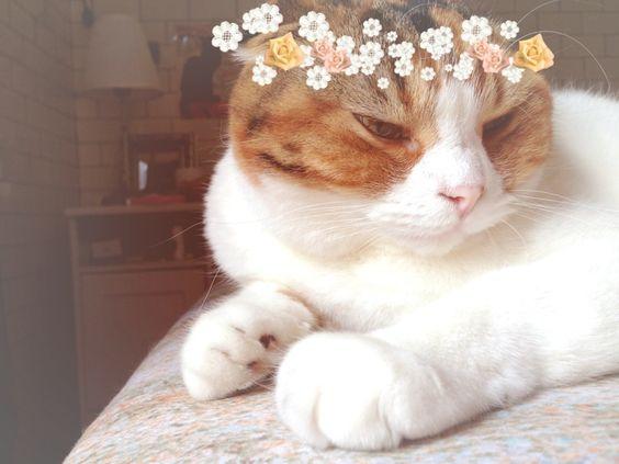 Bride cat