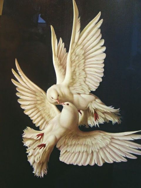 Pin by Diane Waller on DOVE LOVE | Bird art, Aesthetic art, Renaissance art