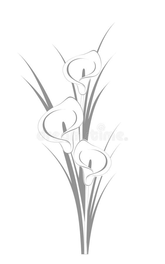 Calla Lilies Graphic Illustration Of Three Calla Lillies On The White Backgroun Affiliate Graphic Illustr In 2020 Lilies Drawing Lily Painting Line Art Flowers