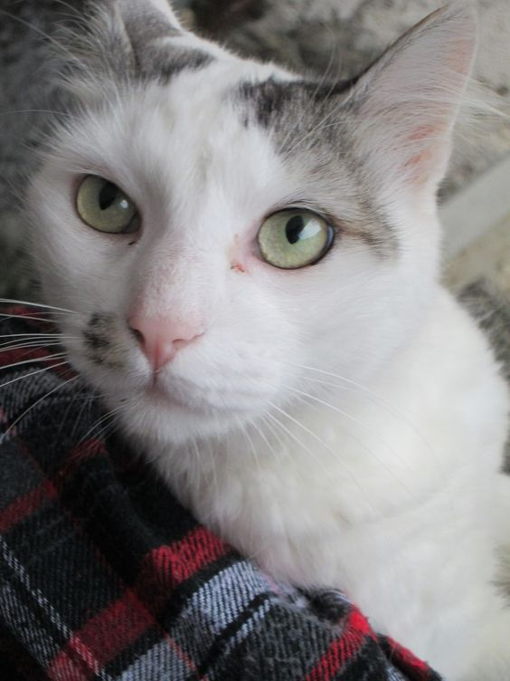 Meu Gato Trakinas | Flickr - Photo Sharing!
