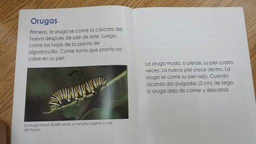 Información de la oruga.