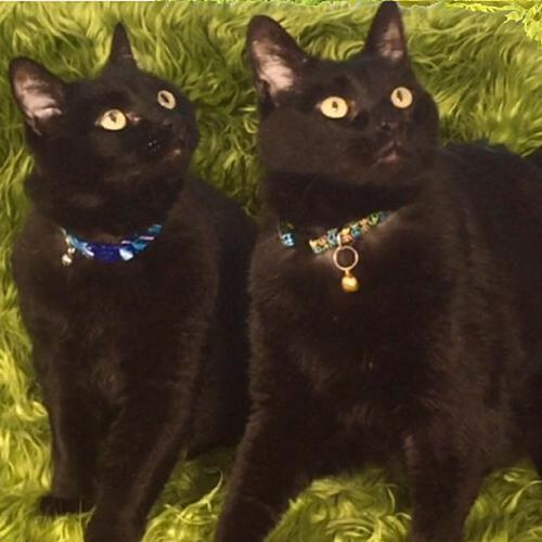 Adopt Maurice Louie On Petfinder Cat Illnesses Pets Pet Adoption