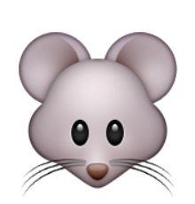visage de la souris