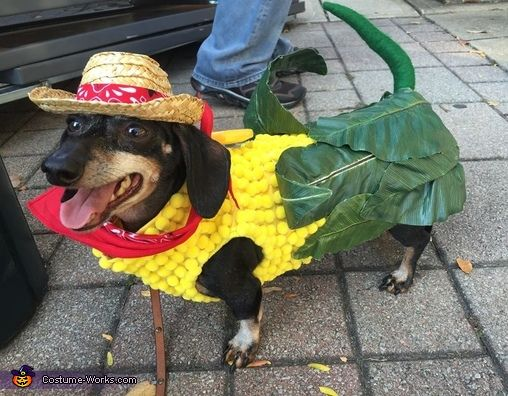 dachshund halloween, halloween costumes for dogs, funny dog costumes, doxie costumes