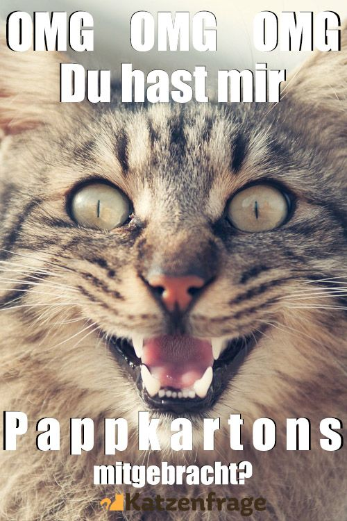 Katzen Kartons Katzenhumor Katzen Lustige Katzenbilder