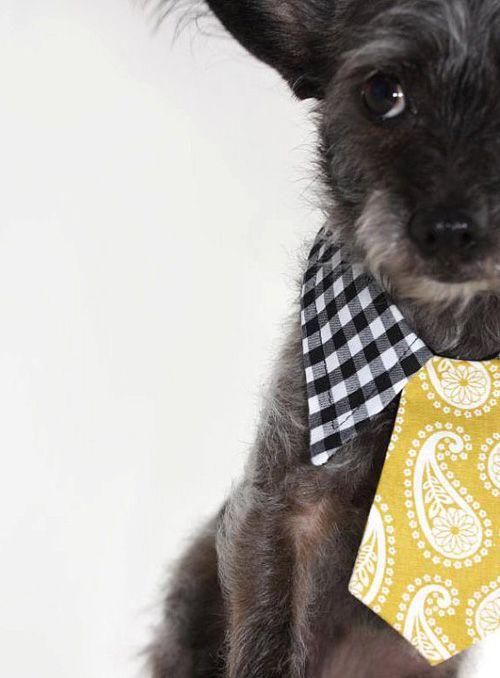 Pet ties & bowties