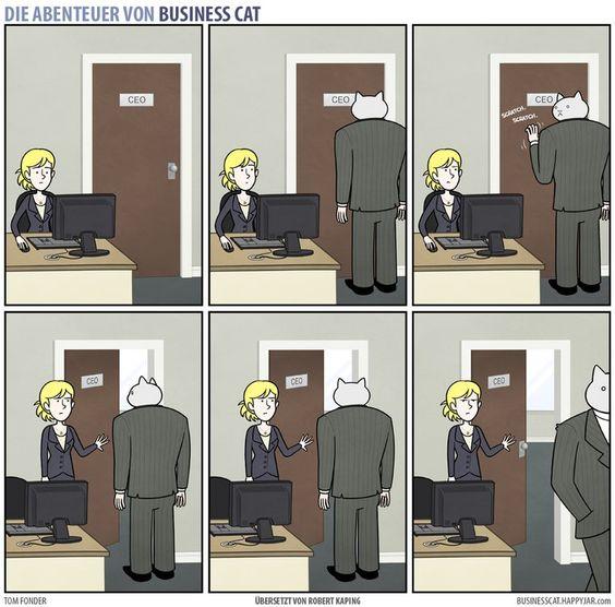 «Business Cat» Teil 2:So sieht dein weiterer Büroalltag aus, wenn dein Chef eine Katze wäre - watson