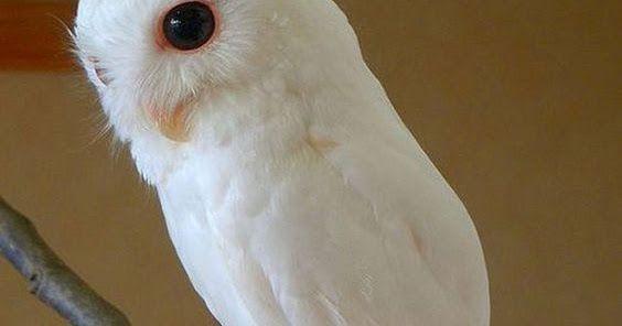 A Z List Of 125 Rare Albino Animals Pics Tierbilder