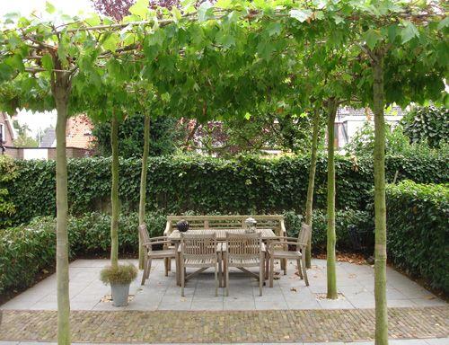 Tuin terras dakplatanen garden ideas pinterest tuinen tuin en met - Ideeen terras ...