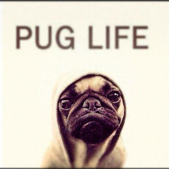 #Pug Life Yo