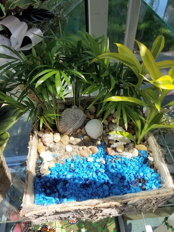 A Dish Garden With Mixed Green Plants Sea Shells Sand And Blue Rock Stillingsandembry Florist Flowers Dish Miniature Fairy Gardens Plants Green Plants