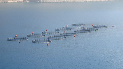 Center for Food Safety   News Room   Fishing and Public Interest Groups File Challenge to Feds' Unprecedented Decision to Establish Aquaculture in Offshore U.S. Waters