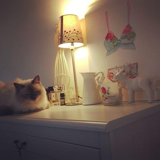 A nap#cats #kitten #lovecats #ragdoll #chinchilla #Persian #kitten #meow #lovecat