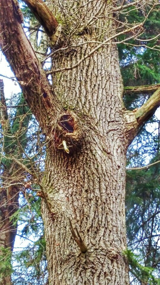 Tree in February. Denmark. Taken with Sony Xperia Z1 smartphone