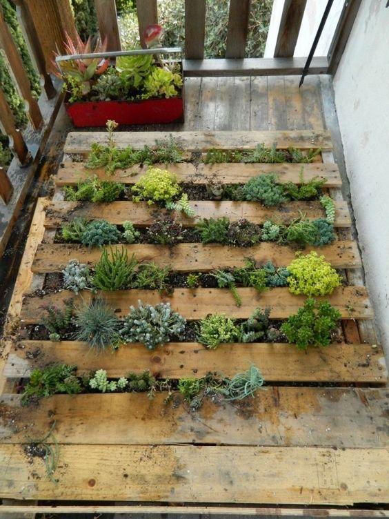 Pallet wall garden.