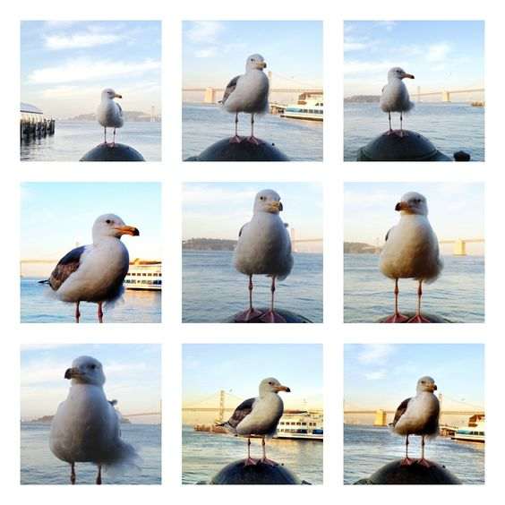 Several of my #mobile #photography images combined using the #Frametastic App #seagull