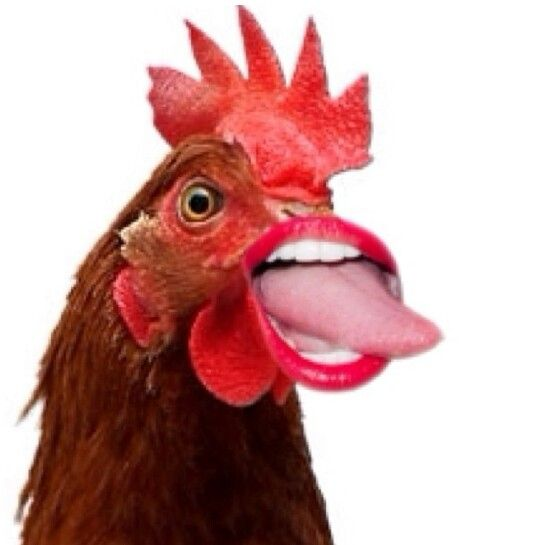 If Chickens Had Human Mouths And Miley Tongues Funny