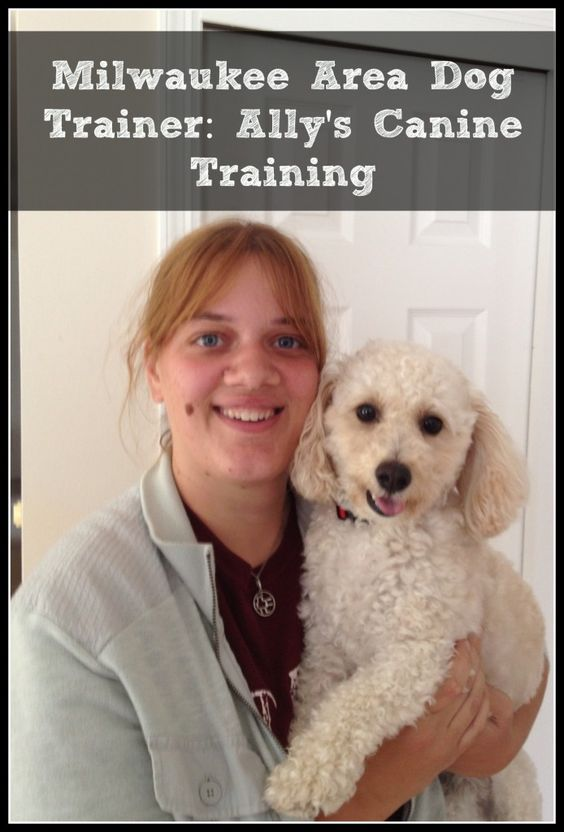 Need A Dog Trainer In The Greater Milwaukee Area We Recommend