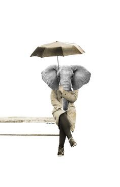 Collage of an elephant in the rain