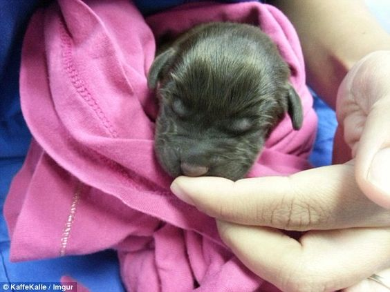 Vet Saves An Abandoned Dog With A Cleft Palate And Documents His Life Puppies Vet Tech Animals