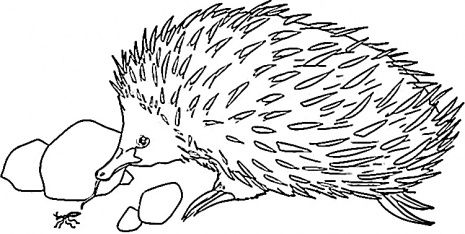 Echidna colouring pages