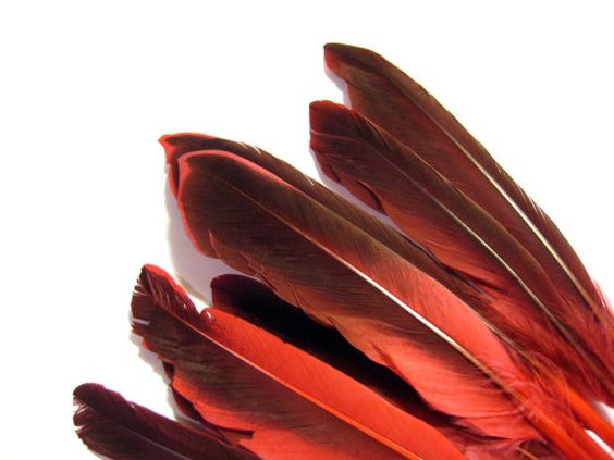 x10 Red Feathers, Hat Making, Jewellery Supply, Fabrication bijoux, Jewelry Findings, Hat Supply