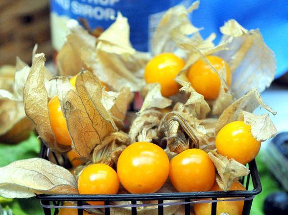 Physalis - fruta indígena, nascida na região da Amazônia brasileira, e conhecida popularmente como Camapu.