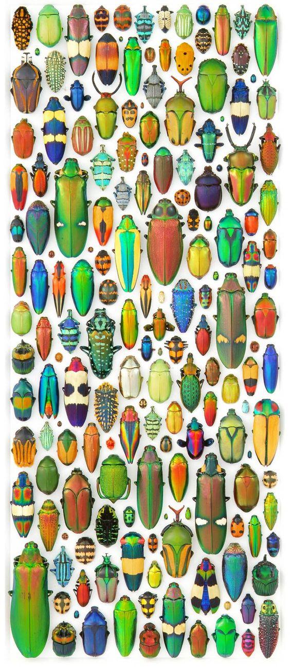 Biophilia – Les délicates mosaïques d'insectes de Christopher Marley: