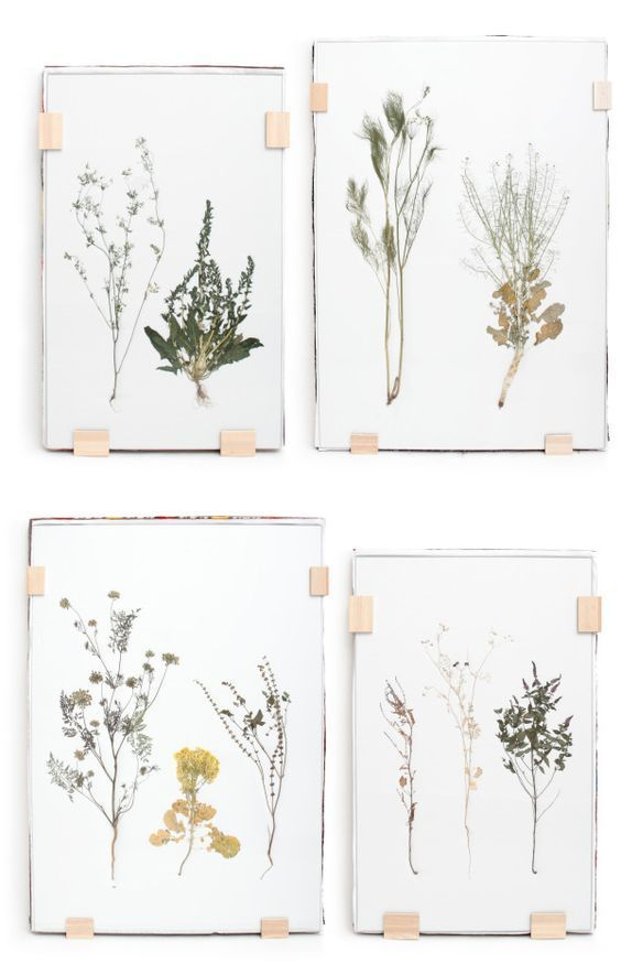 Herbarium Under Glas Blomster Glas Herbarium Handmade Home