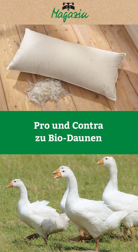 Pro Vs Contra Bio Daunen Daunen Decke Daunendecke Und