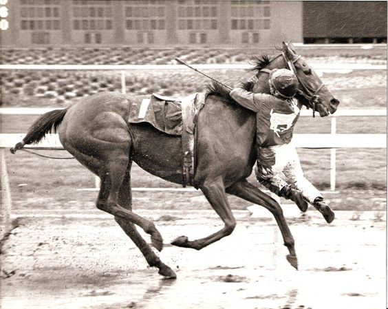 Feb. 3, 1989: Apprentice jockey Nate Hubbard hung on for second literally when his horse, Sweetwater Oak, stumbled near the finish line at Golden Gate Fields and flipped the rider out of his saddle. As he tumbled forward, Hubbard grabbed on to the filly's neck and hung in mid-air until the race was over. The track stewards ruled it an official finish because Hubbards feet never touched the ground and Sweetwater Oak carried her assigned weight throughout the race.