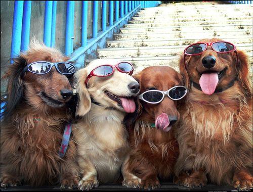Happy dogs. :)