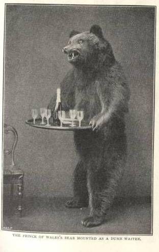 Bear Bar:
