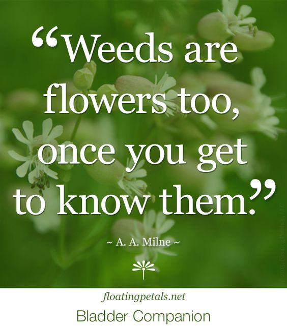 If we only took the time to get to know what we thought were weeds, we would have a lot more flowers in our view.