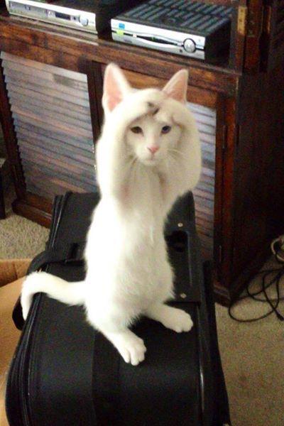 #cat: