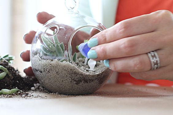 How To Make A Succulent Sea Terrarium