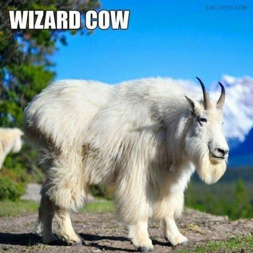 Weird Animals Names And Pictures 6