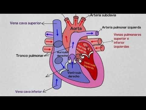 que es el sistole y diastole