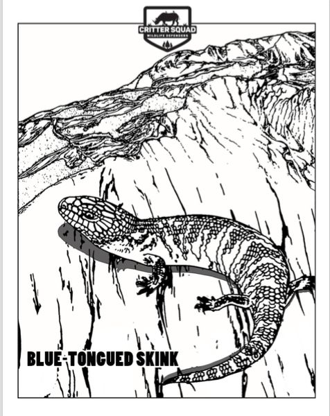 Blue Tongued Skink Coloring Page C S W D With Images Blue