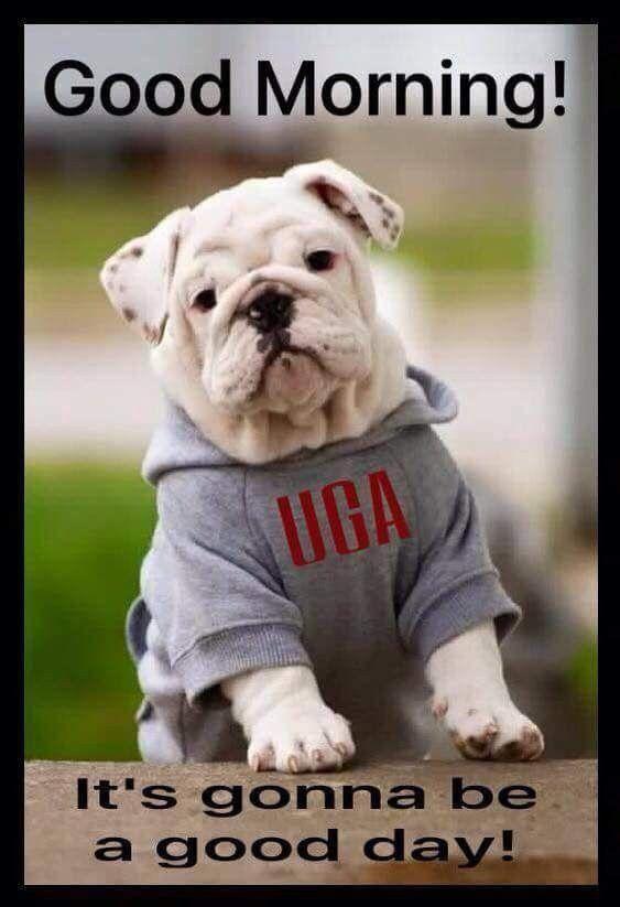 English Bulldog Puppies - Puppychase Kennels