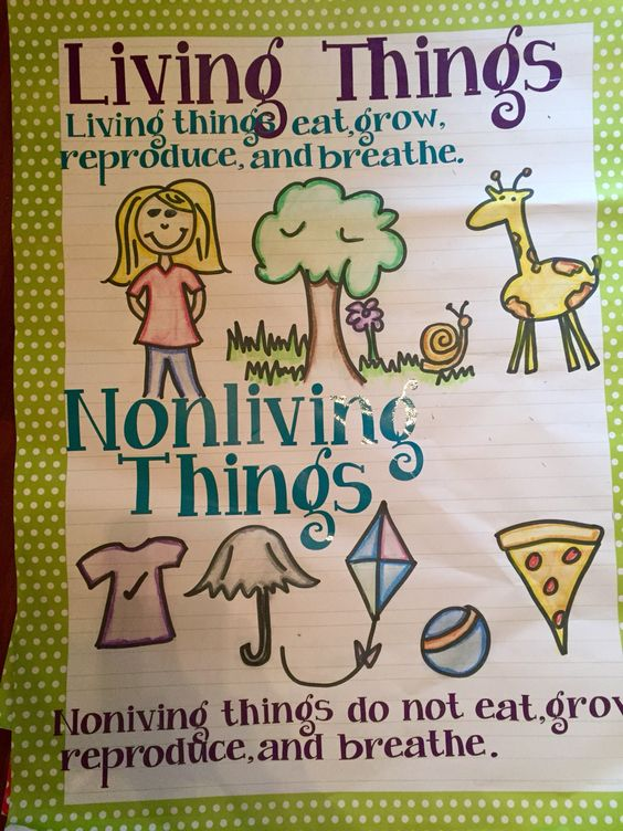 Free Worksheets worksheet of living and nonliving things : My Living Nonliving Anchor Chart : 14-15 School Year ...
