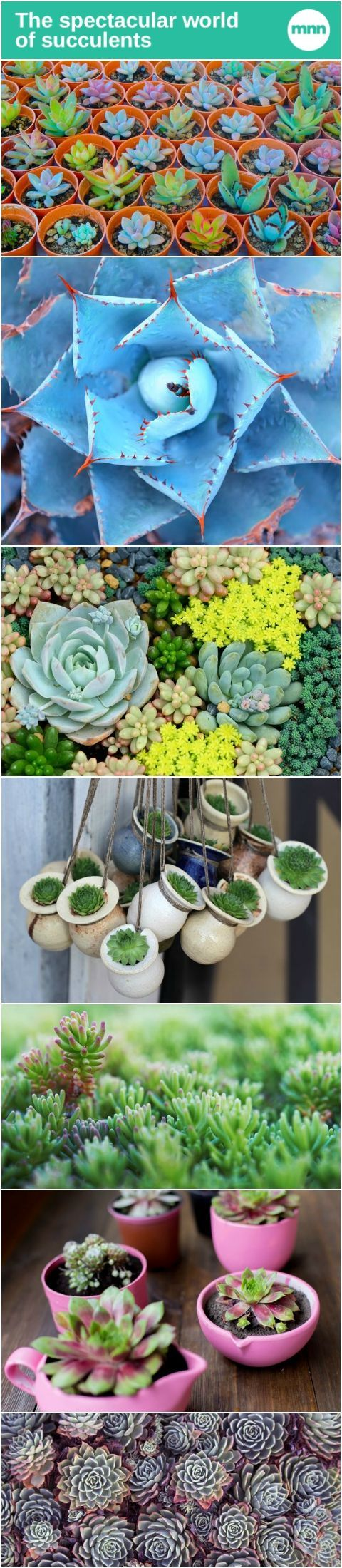 Succulents are often touted as some of the easiest plants to care for, but that's not the only reason they're so popular!