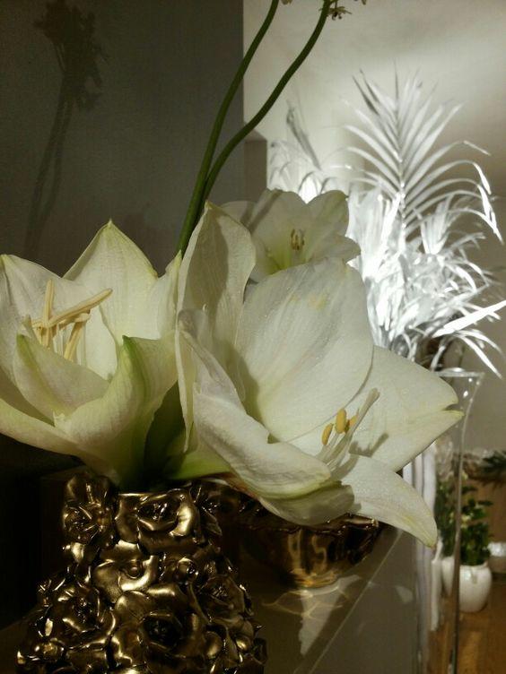 Amaryllis met zilver